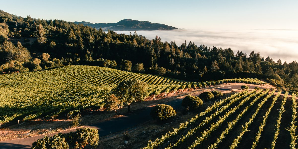 Aerial Shot of Mt Brave Vineyard