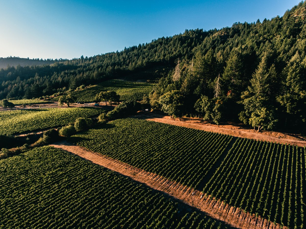 Mt. Brave Aerial shot of Vineyards